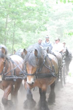 paard en pony